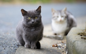 Обои асфальт, кошки, улица, фокус, бордюр, котята