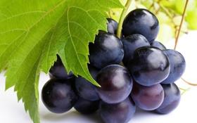 Обои лист, зеленый, фон, обои, еда, ягода, виноград