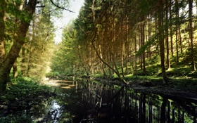 Картинка лес, лето, природа, тень, речка