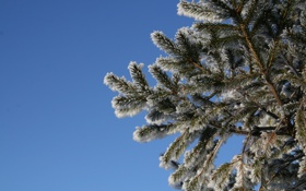 Обои зима, снег, синий, Елка, дерево