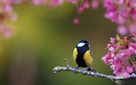 Картинка птица, птичка, синичка, синица