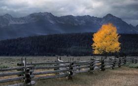 Картинка пейзаж, осень, ограждение, лес, пасмурно, забор, дерево