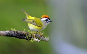 Обои птица, перья, ветка, цвет