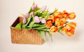 Обои корзина, тюльпаны, tulips, basket, flowers bouquet, букет цветы