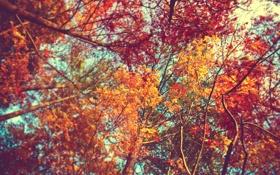 Обои листья, nature, кроны, вид, осень, Деревья
