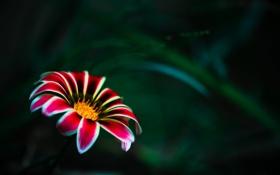 Обои серединка, цветок, один, макро