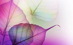 Обои листья, прозрачность, макро