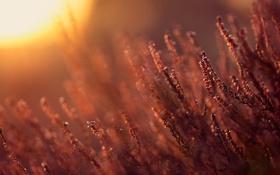 Обои ветки, блики, солнце, природа, тепло, цветы
