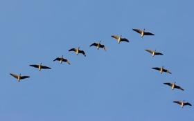Картинка полёт, небо, птицы