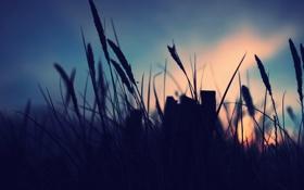 Обои небо, трава, макро, закат, растения