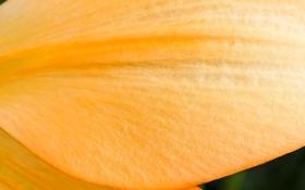 Картинка цветок, природа, текстура, лепесток