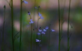 Обои трава, цветы, синие, розмытость