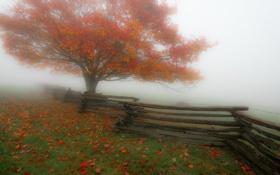 Картинка туман, дерево, забор