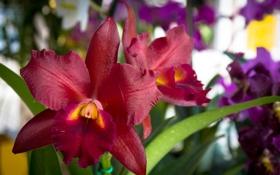 Обои цветы, лепестки, ирис