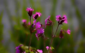Обои лепестки, ветка, макро, цветы