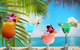 Обои пляж, цветы, коктейли, листья пальмы