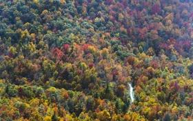 Обои дорога, осень, лес, деревья, США, вид сверху, North Carolina
