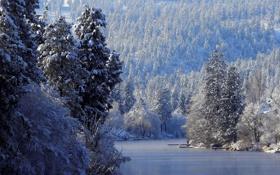 Картинка зима, иней, лес, снег, деревья, река, лёд