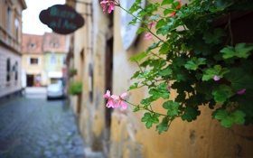 Обои цветок, листья, город, улица, растение, дома