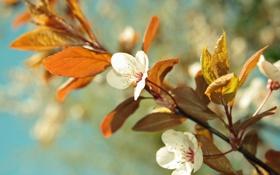Обои весна, небо, вишня, цветение, цвета, цвет, листья