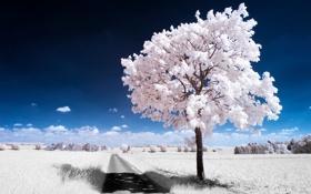Обои white, trees, небо, дерево