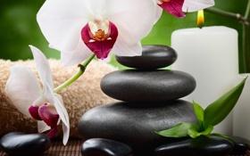 Обои камни, орхидея, flowers, спа, orchid, stones, candle