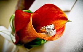 Обои цветок, оранжевый, яркий, камни, золото, бриллиант, драгоценности