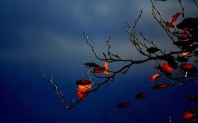 Обои небо, тучи, ветка, листья, осень