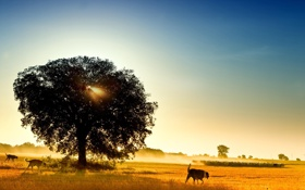 Обои овцы, лето, природа, собаки, отара, дерево