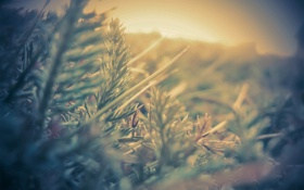 Картинка растение, свет, иголки, фото