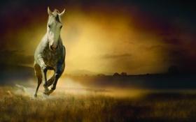 Обои конь, трава, бег, движение, туман