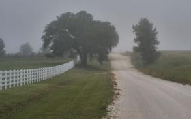 Картинка заборы, деревья, дорога, природа, пейзажи, туманы, дерево