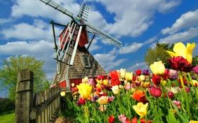 Обои весна, клумба, облака, забор, тюльпаны, мельница, деревья