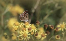 Обои бабочки, цветы, крылья, усики