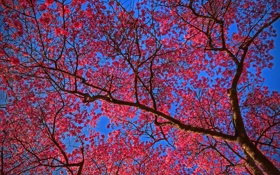 Картинка сад, весна, цветение, небо, дерево