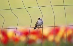 Картинка птица, забор, проволочный