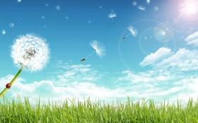 Обои пейзаж, поле, небо, одуванчики