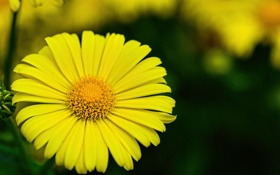Обои природа, цветок, растение, лепестки