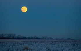 Обои деревья, зима, поле, сумерки, заморозки, луна
