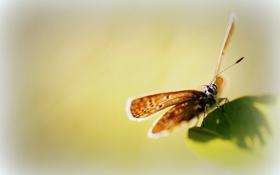 Обои бабочка, зеленый, лист, фон
