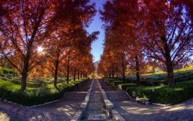 Картинка осень, небо, трава, асфальт, листья, деревья, пейзаж