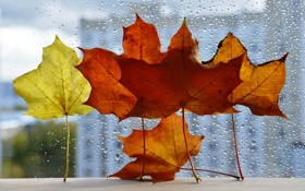 Картинка листья, город, осень, клен, капли, окно, дождь