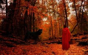 Картинка осень, лес, взгляд, листья, девушка, деревья, пейзаж