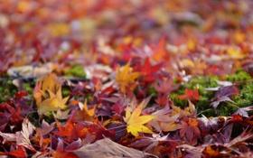 Картинка осень, листья, земля, цветные