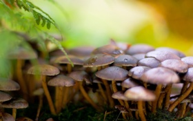 Картинка лес, природа, грибы, мох, папоротник, много, семейство