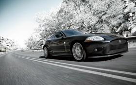 Обои дорога, деревья, чёрный, в снегу, ягуар, Jaguar XK