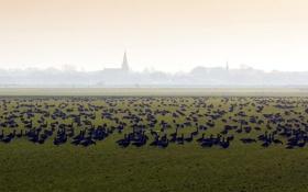 Картинка поле, птицы, природа, туман