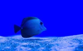 Обои песок, океан, рыбка, дно, подводный мир