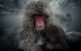 Обои обезьяны, горы, пар, шерсть, японский макак