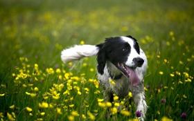 Обои друг, собака, природа, лето